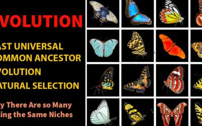 Evolution and Natural Selection, elementary science series, blair lee