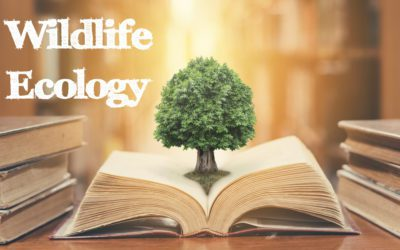 Tree sprouting from open book with text Wildlife Ecology